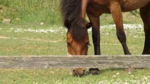 宮崎の探偵と馬