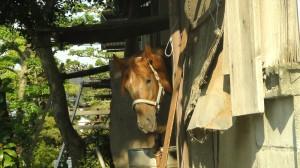 串間市の馬